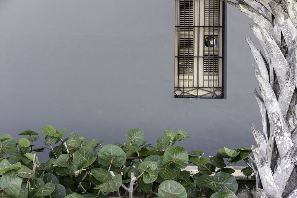 Window Grill and Shutters