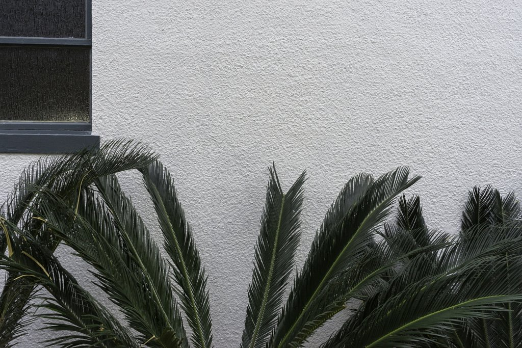 Stucco and Fronds