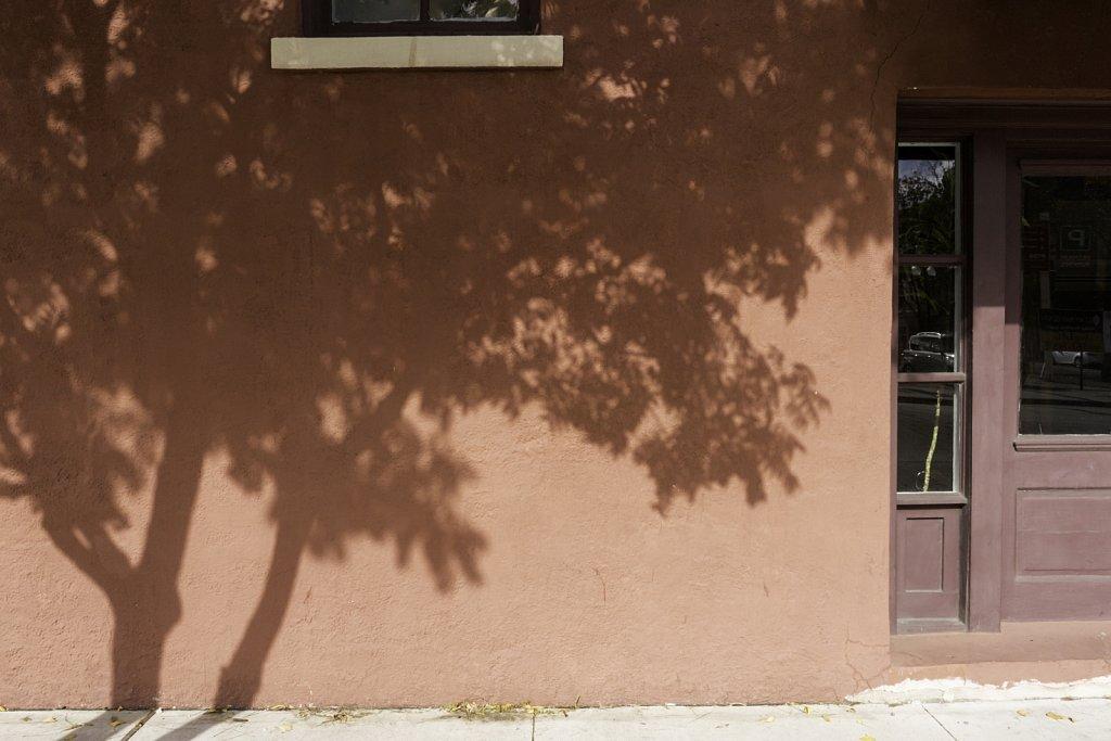 Tree Shadow on Building